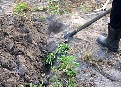 Прекопаване на почвата...
