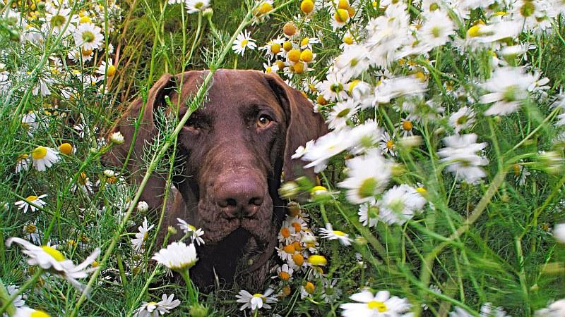 Куче в градината...