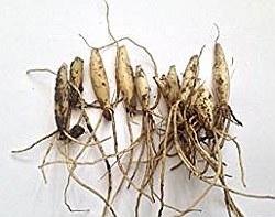 Луковици на левурда (Allium ursinum)...