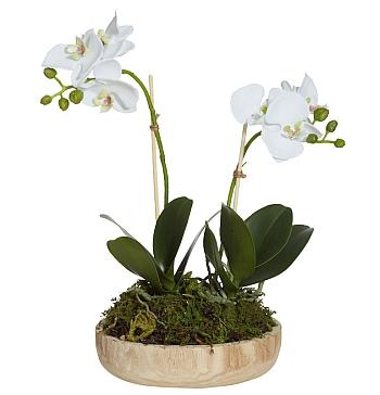 Орхидея с мъх...